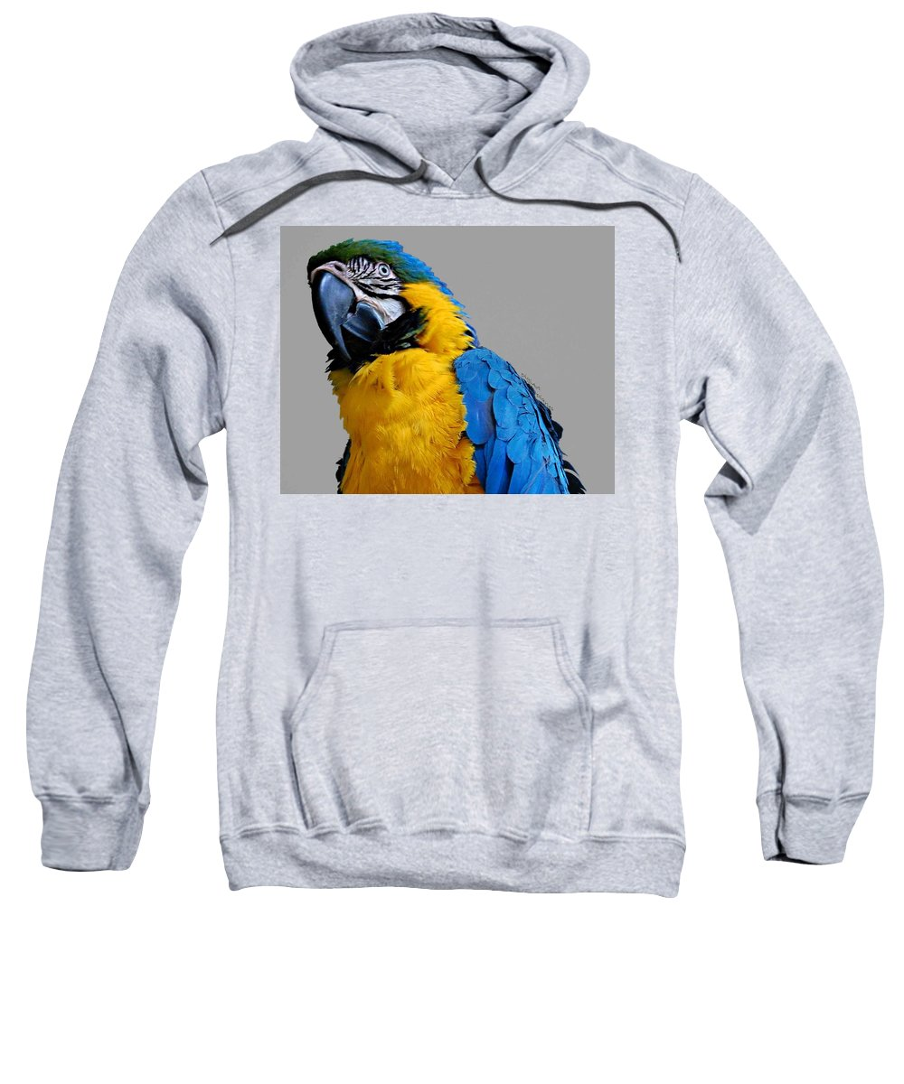 Macaw Sweatshirt featuring the photograph Could I Look Any Better by DigiArt Diaries by Vicky B Fuller