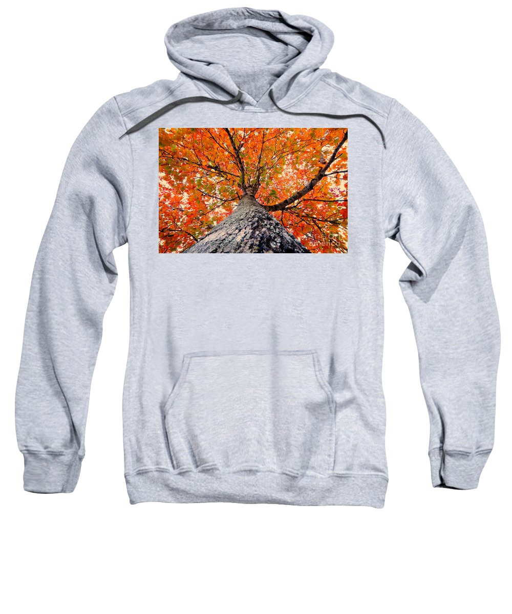 Fall Sweatshirt featuring the photograph Covered In Fall by David Lee Thompson