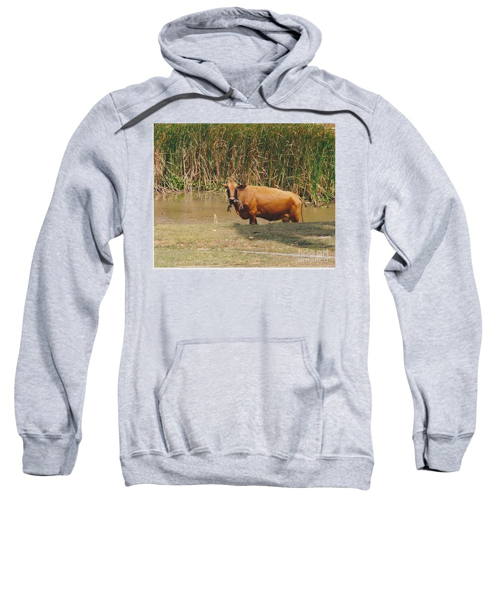 Animal Sweatshirt featuring the photograph Cow In The Field by Michelle Powell