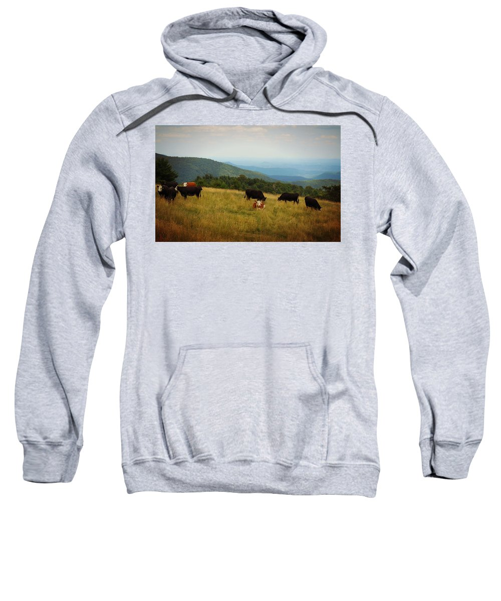 Doughton Park Sweatshirt featuring the digital art Cows At Doughton Park by Valerie Reeves