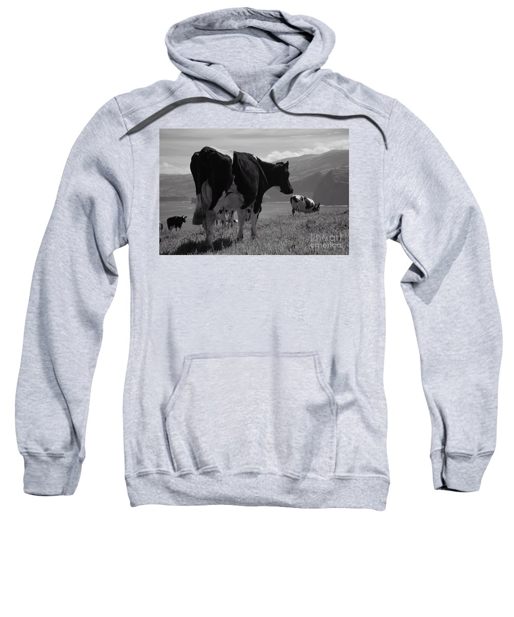 Azoren Sweatshirt featuring the photograph Cows by Gaspar Avila