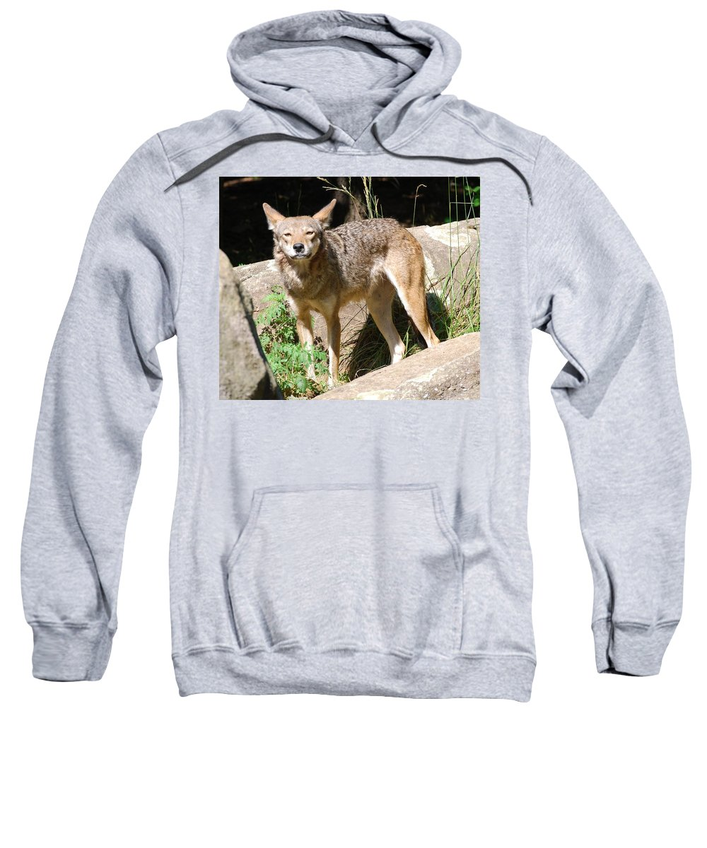 Coyote Sweatshirt featuring the photograph Coyote Grin by Eric Liller