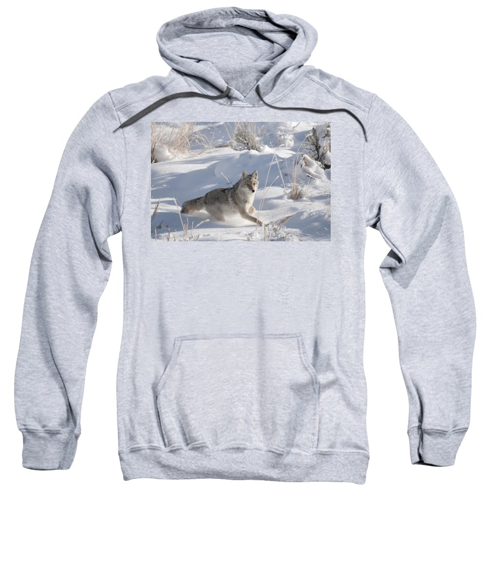 Coyote Sweatshirt featuring the photograph Coyote On The Move by Gary Beeler