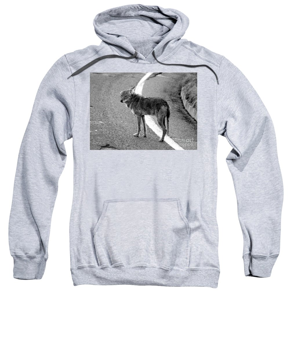 Coyote Sweatshirt featuring the photograph Coyote On The Road by David Lee Thompson