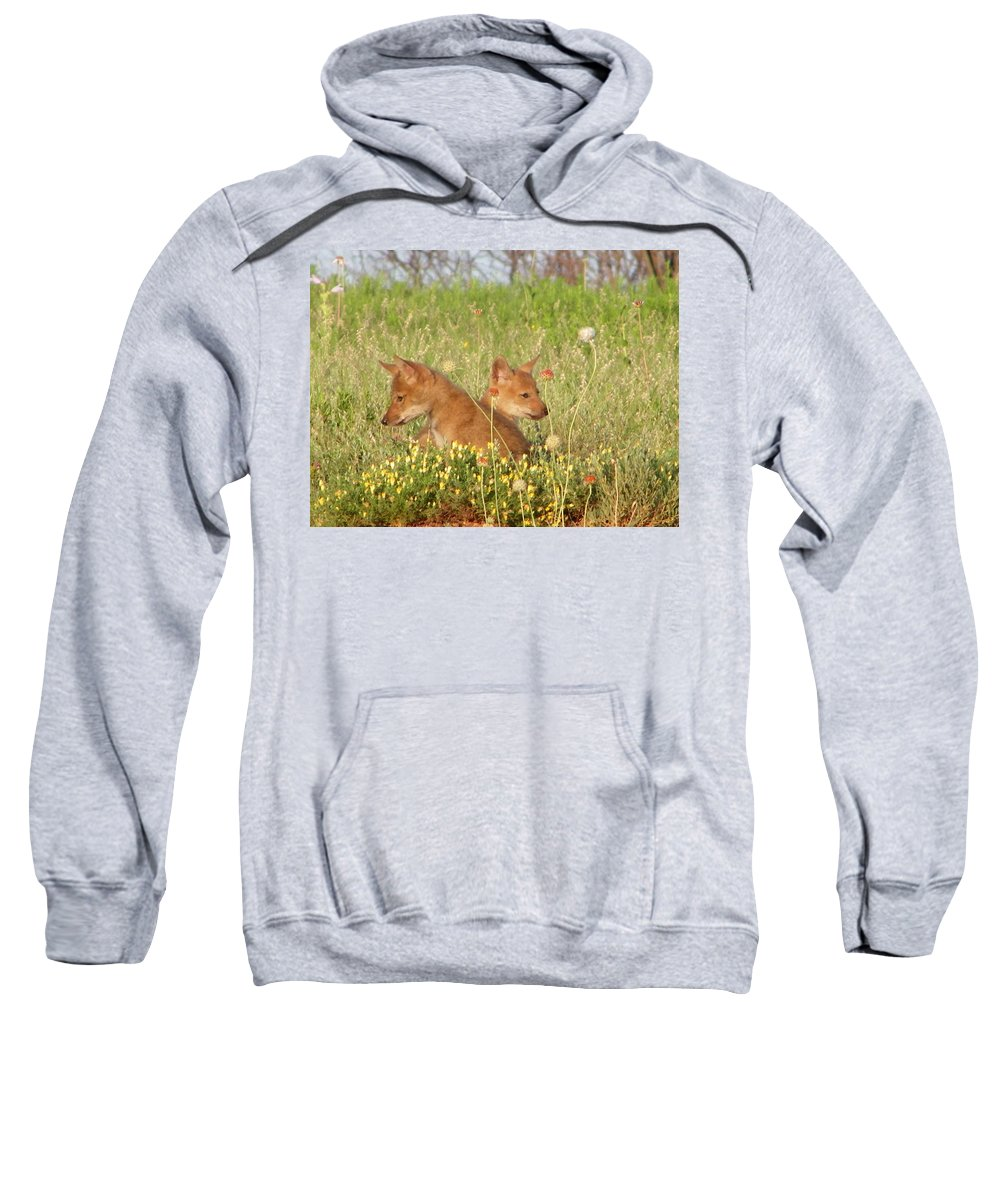 Pup Sweatshirt featuring the photograph Coyote Pups by Gale Cochran-Smith