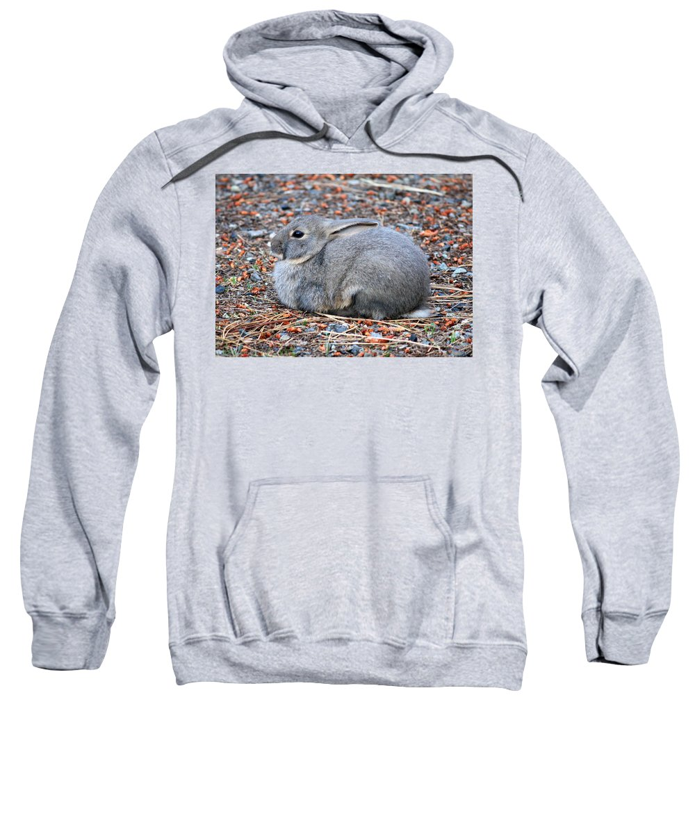 Rabbit Sweatshirt featuring the photograph Cuddly Campground Bunny by Carol Groenen