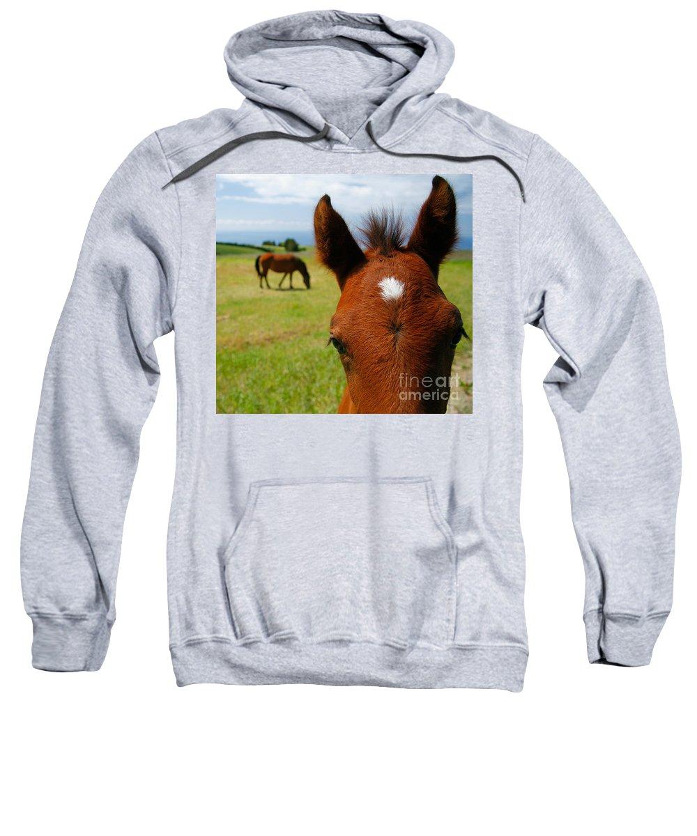 Farm Sweatshirt featuring the photograph Curious Colt by Gaspar Avila
