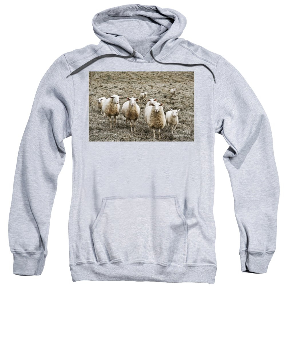 Group Sweatshirt featuring the photograph Curious Sheep by John Greim