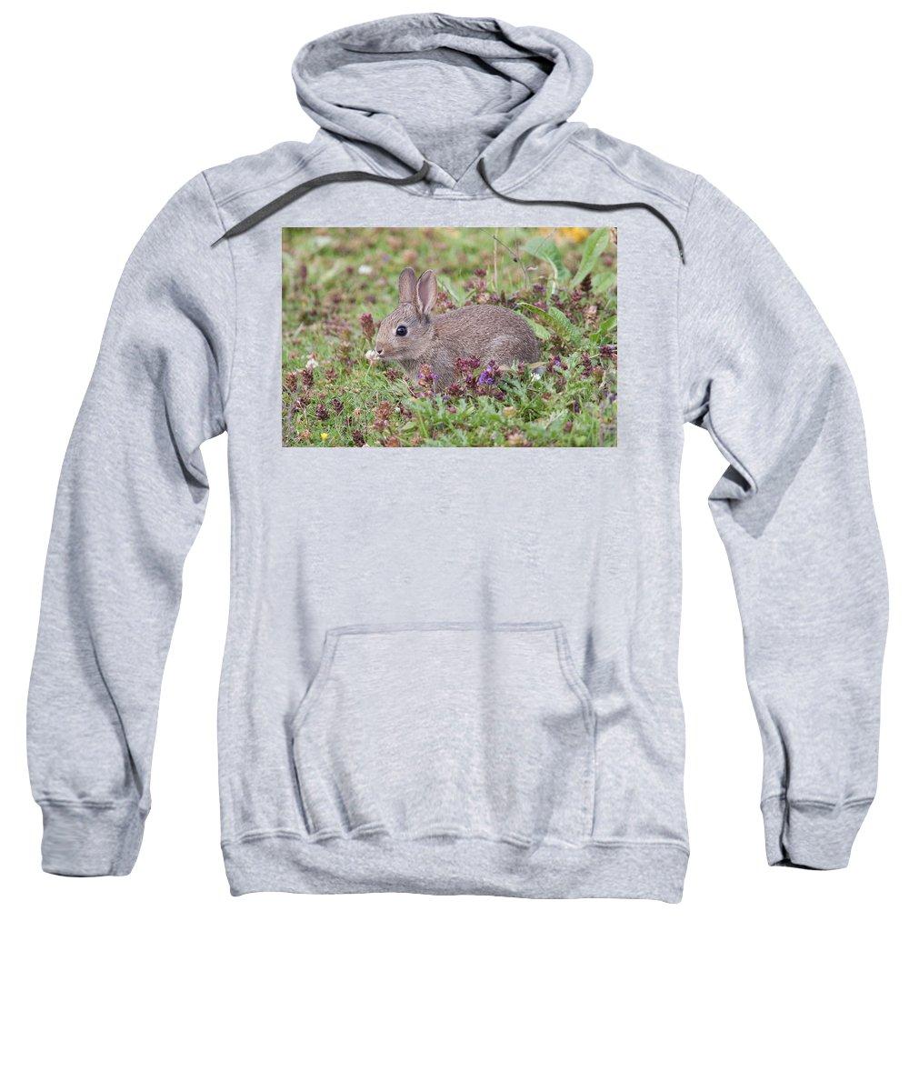 Wildlife Sweatshirt featuring the photograph Cute Baby Bunny by Bob Kemp
