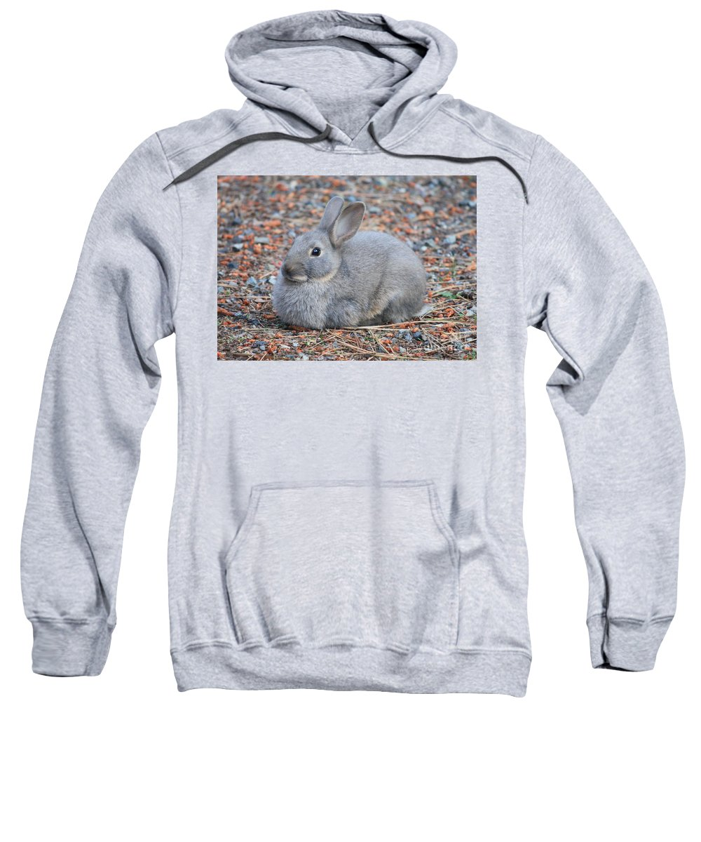 Rabbit Sweatshirt featuring the photograph Cute Campground Rabbit by Carol Groenen