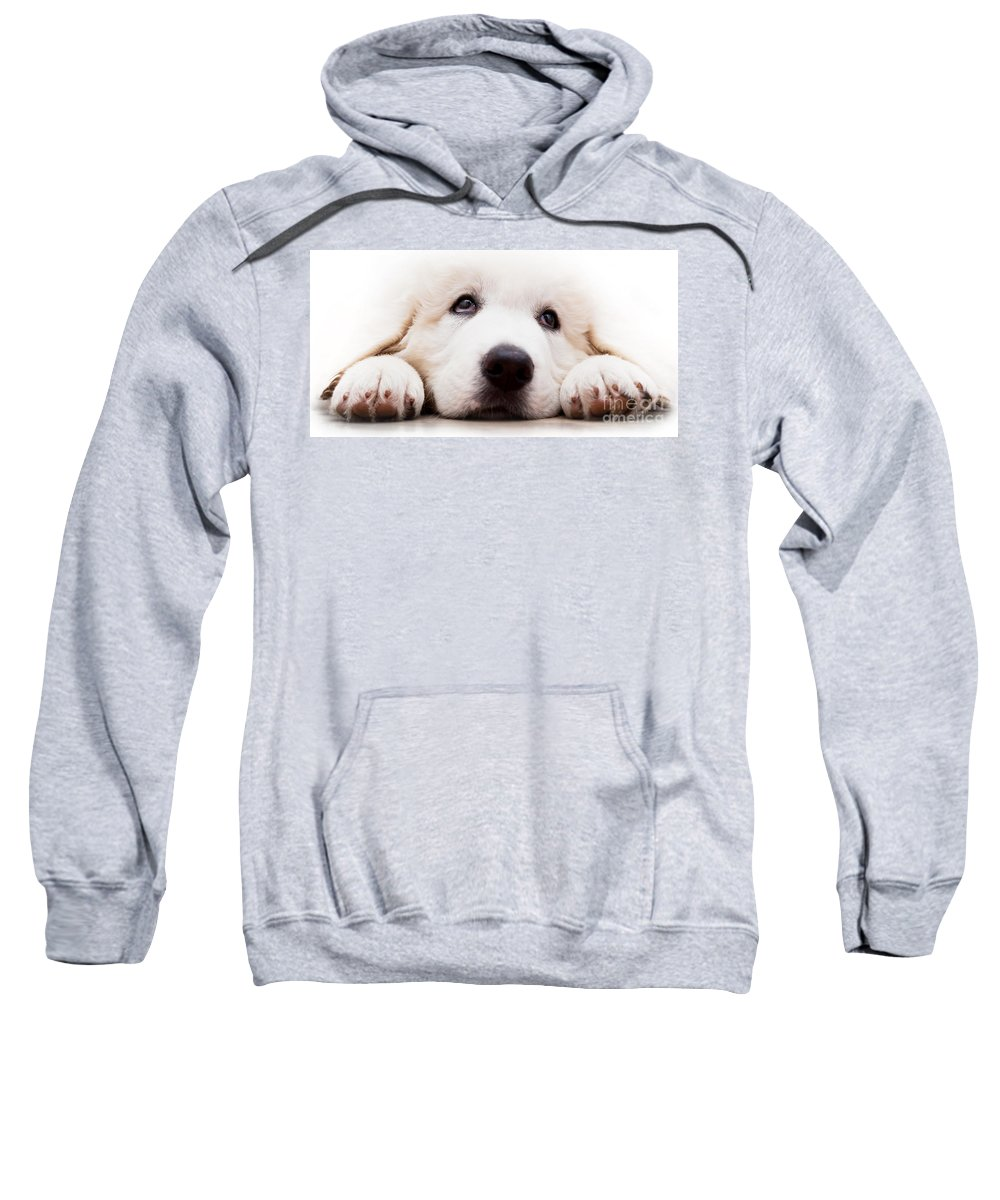 Dog Sweatshirt featuring the photograph Cute White Puppy Dog Lying And Looking Up. Polish Tatra Sheepdog by Michal Bednarek