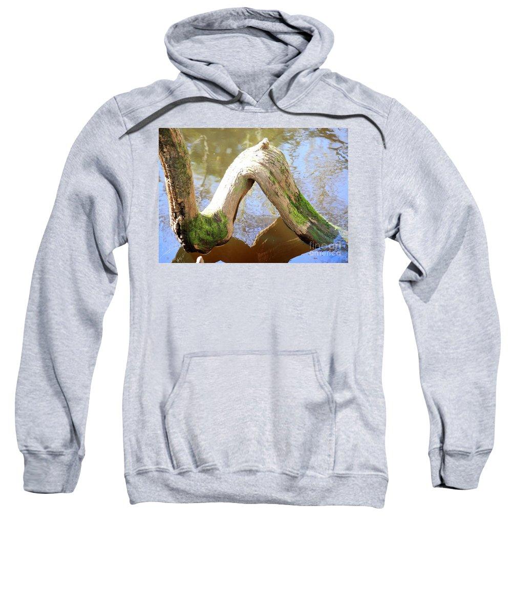 Cypress Knees Sweatshirt featuring the photograph Cypress Knees by Carol Groenen