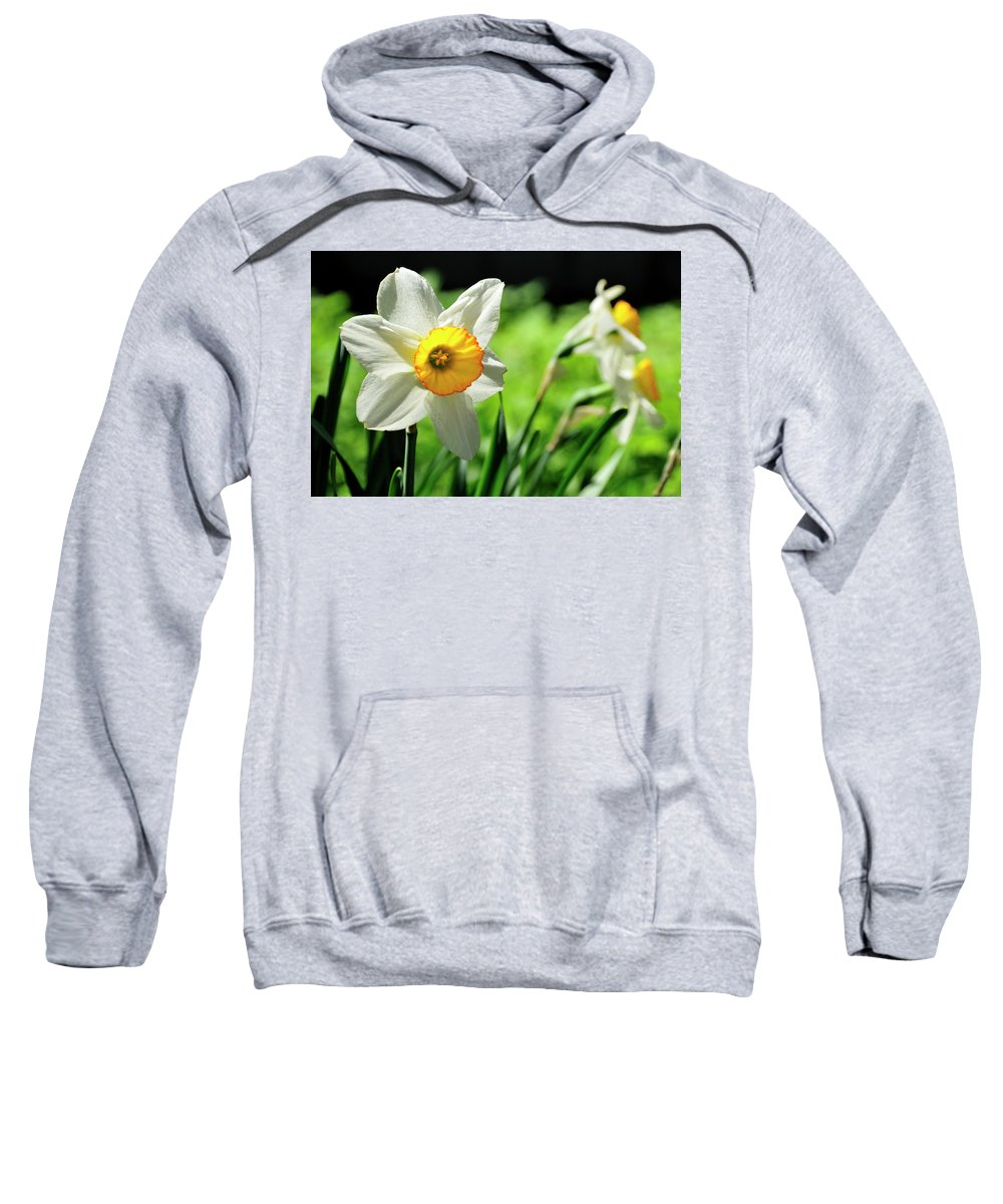 Flower Sweatshirt featuring the photograph Daffodil by David Arment