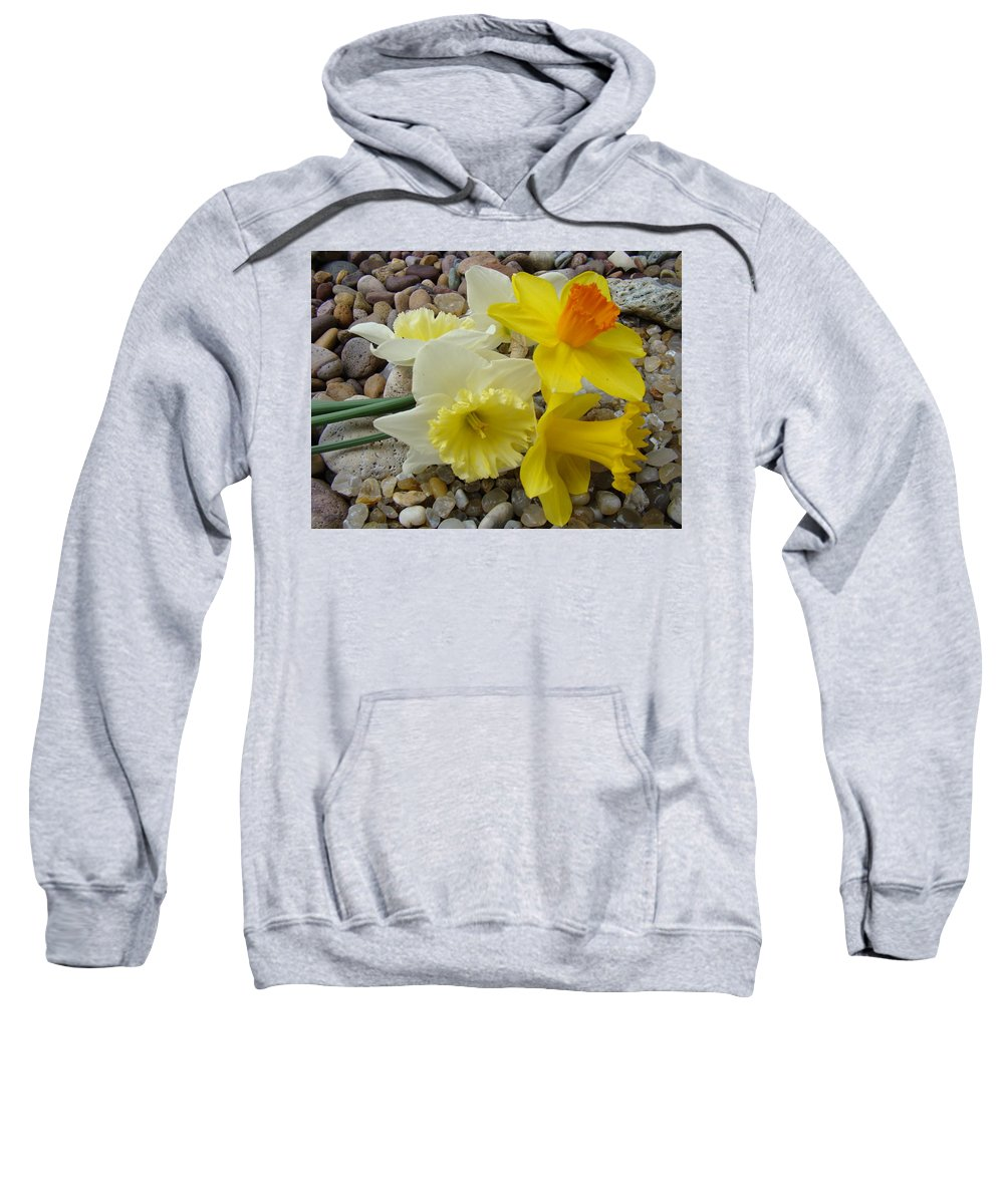 �daffodils Artwork� Sweatshirt featuring the photograph Daffodils Flower Artwork 29 Daffodil Flowers Agate Rock Garden Floral Art Prints by Baslee Troutman