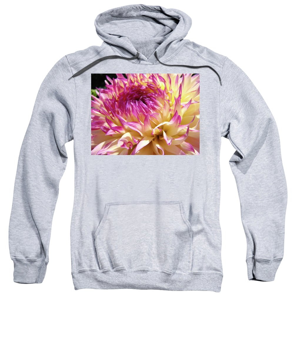 Dahlia Sweatshirt featuring the photograph Dahlia Flower Art Sunlit Floral Prints Baslee Troutman by Baslee Troutman