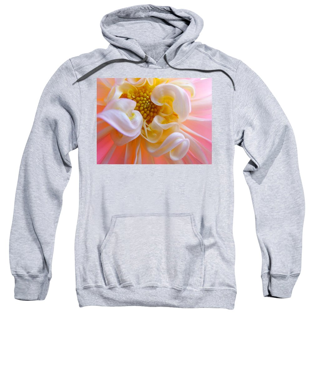 Dahlia Sweatshirt featuring the photograph Dahlia Flower Macro Pink White Dahlias Floral Baslee Troutman by Baslee Troutman