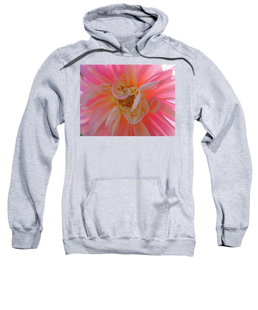 Dahlia Sweatshirt featuring the photograph Dahlia Flower Sunlit Pink White Dahlia Garden Floral by Baslee Troutman