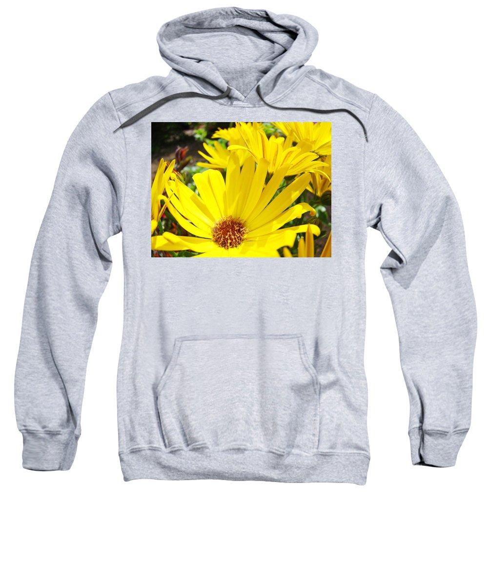 Daisy Sweatshirt featuring the photograph Daisies Summer Garden Art Print Yellow Daisy Baslee by Baslee Troutman