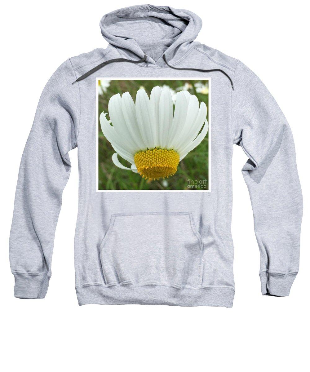 Daisy Reverse Sweatshirt featuring the photograph Daisy Reverse by Susan Garren