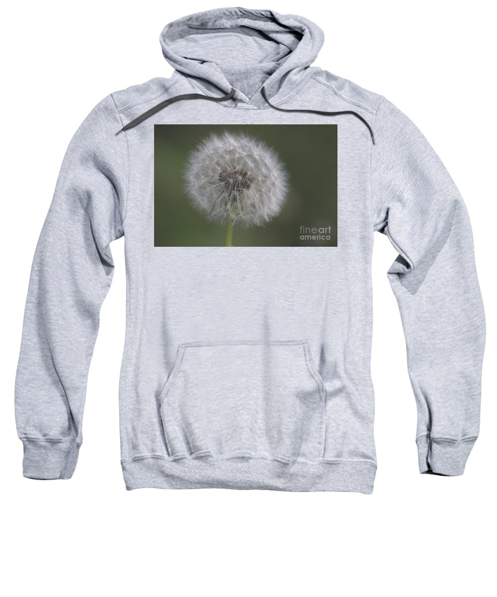 Nature Sweatshirt featuring the photograph Dandelion by Richard Riley
