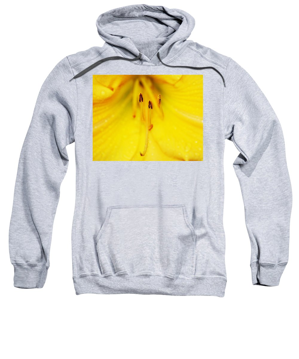 Buenos Aires Sweatshirt featuring the photograph Daylily by Osvaldo Hamer