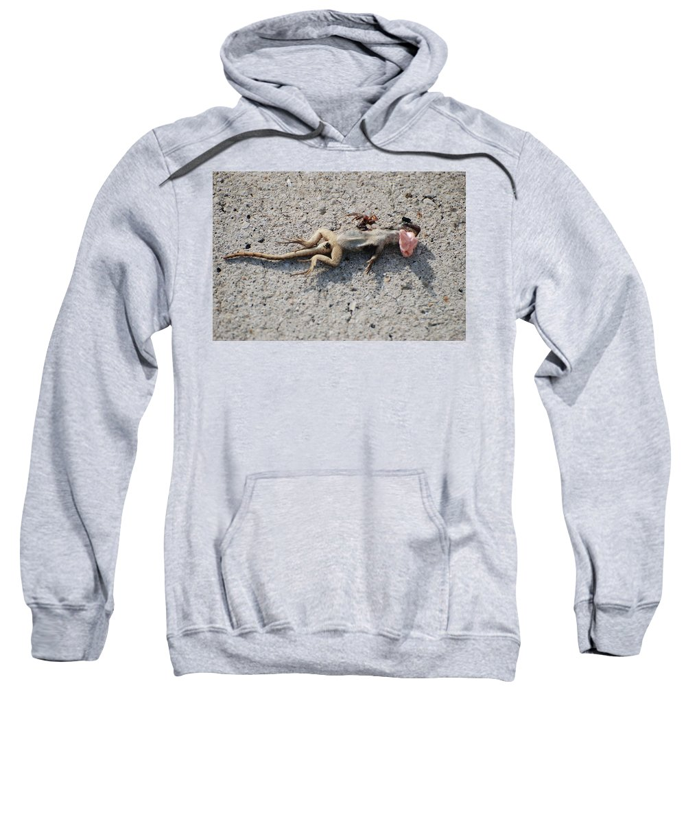 Lizards Sweatshirt featuring the photograph Death By Gum by Rob Hans