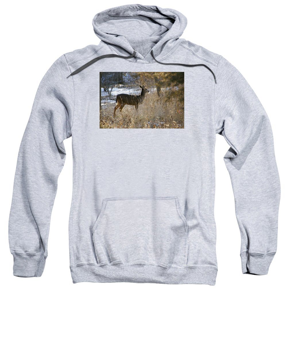 Deer Sweatshirt featuring the photograph Deer in Morning light by Toni Berry