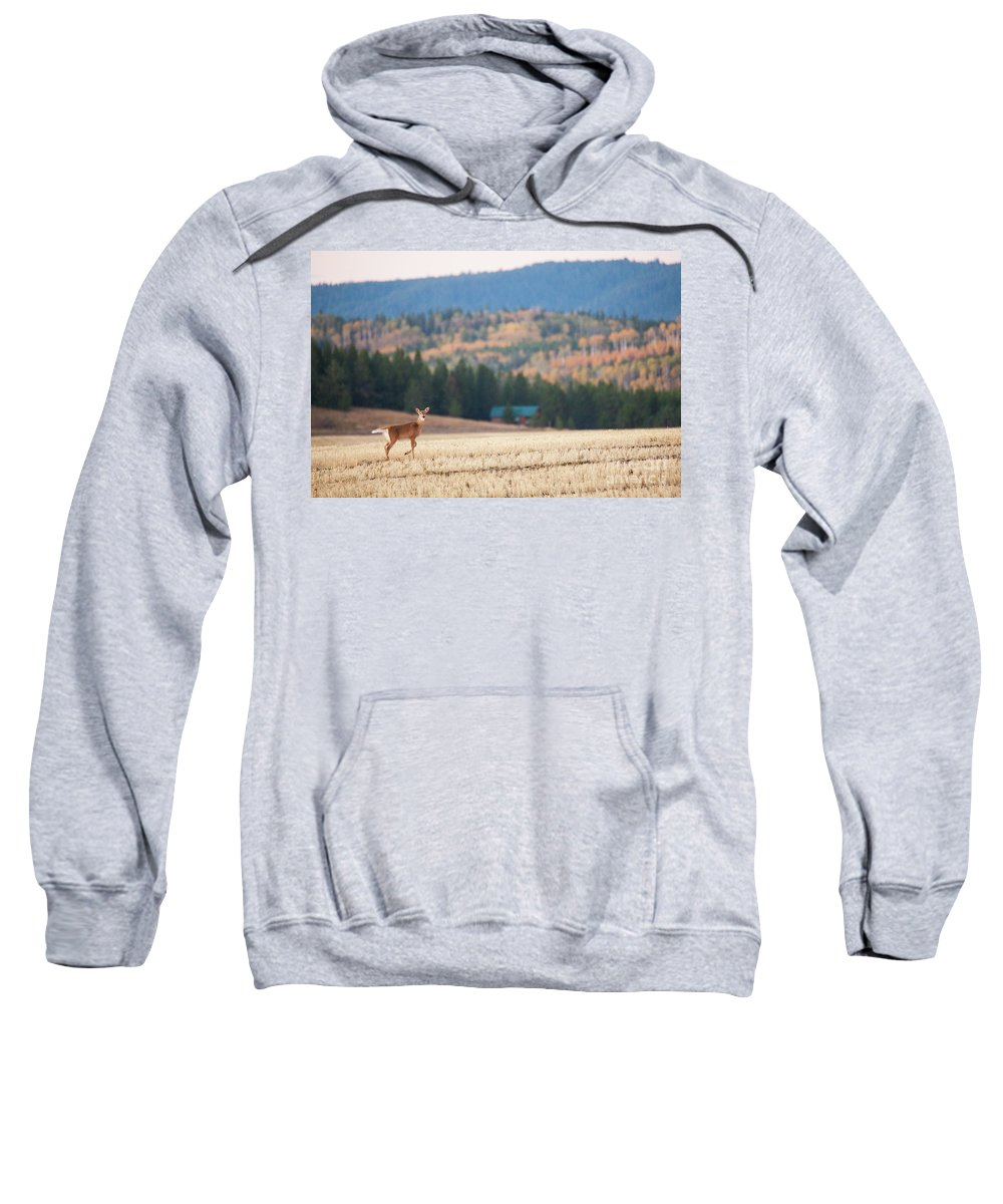 Deer Sweatshirt featuring the photograph Deer Poses In The Fall by Bret Barton