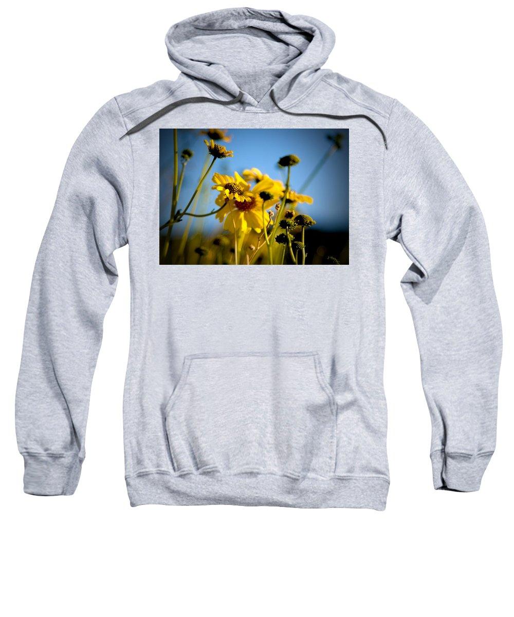 Desert Sunflower Sweatshirt featuring the photograph Desert Sunflower Variations by Chris Brannen