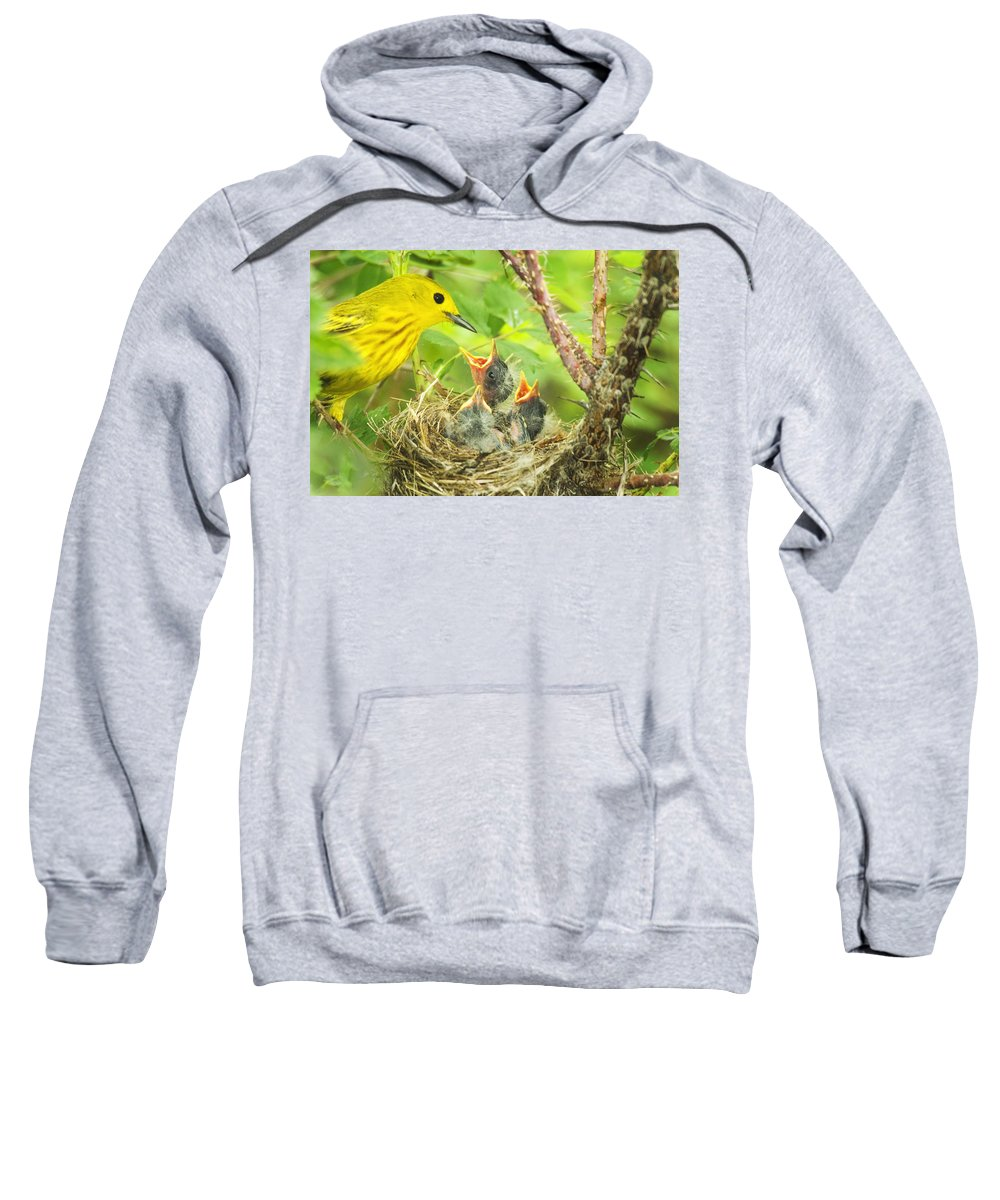 Yellow Warbler Sweatshirt featuring the photograph Dinner At The Warblers by Gary Beeler
