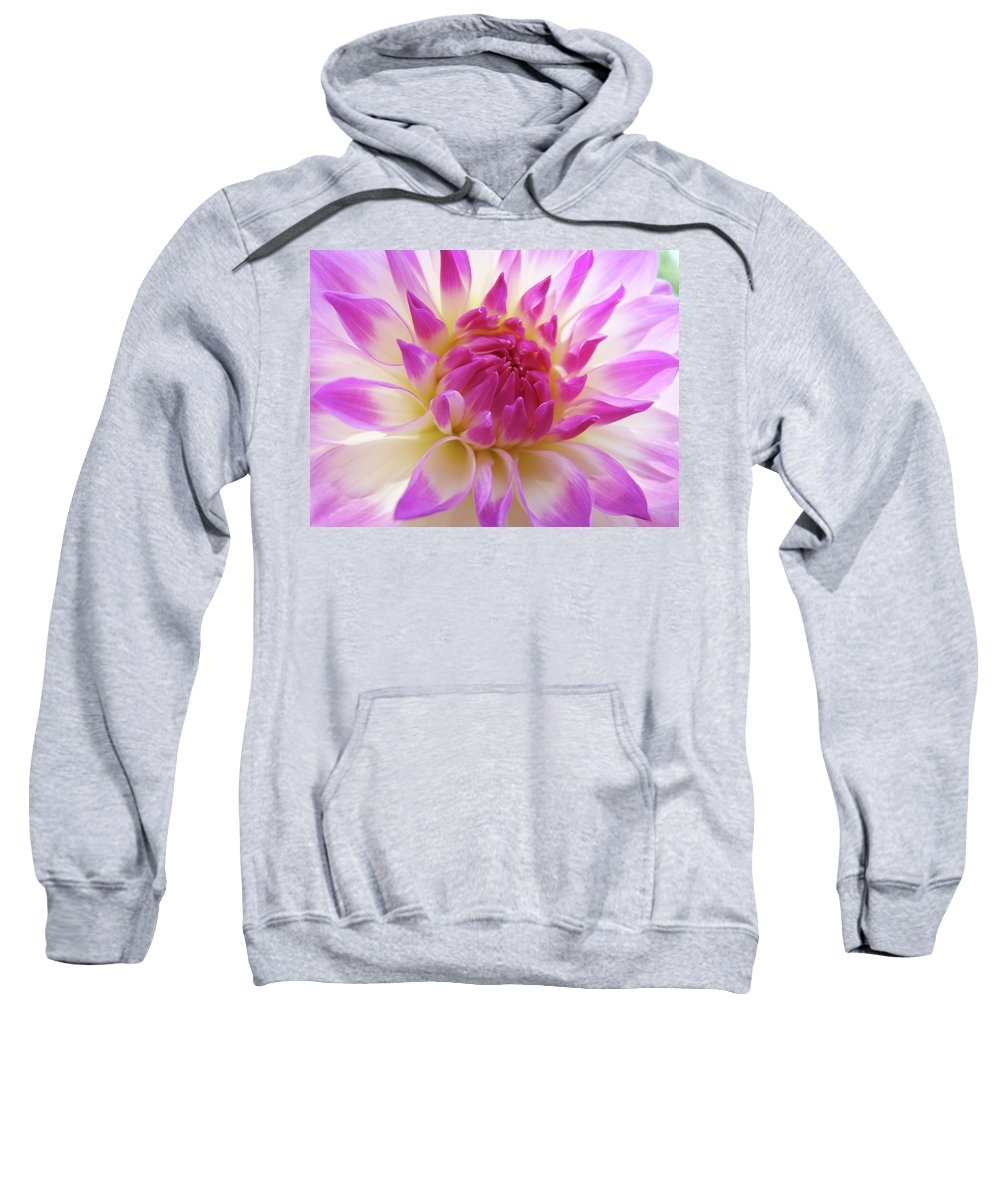 Dahlia Sweatshirt featuring the photograph Dinner Plate Dahlia Flower Art Prints Canvas Floral Baslee Troutman by Baslee Troutman
