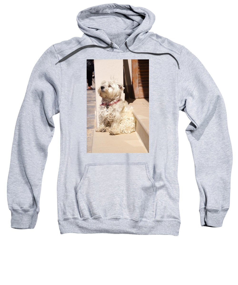 Dog Sweatshirt featuring the photograph Dog Begging by Ron Koivisto