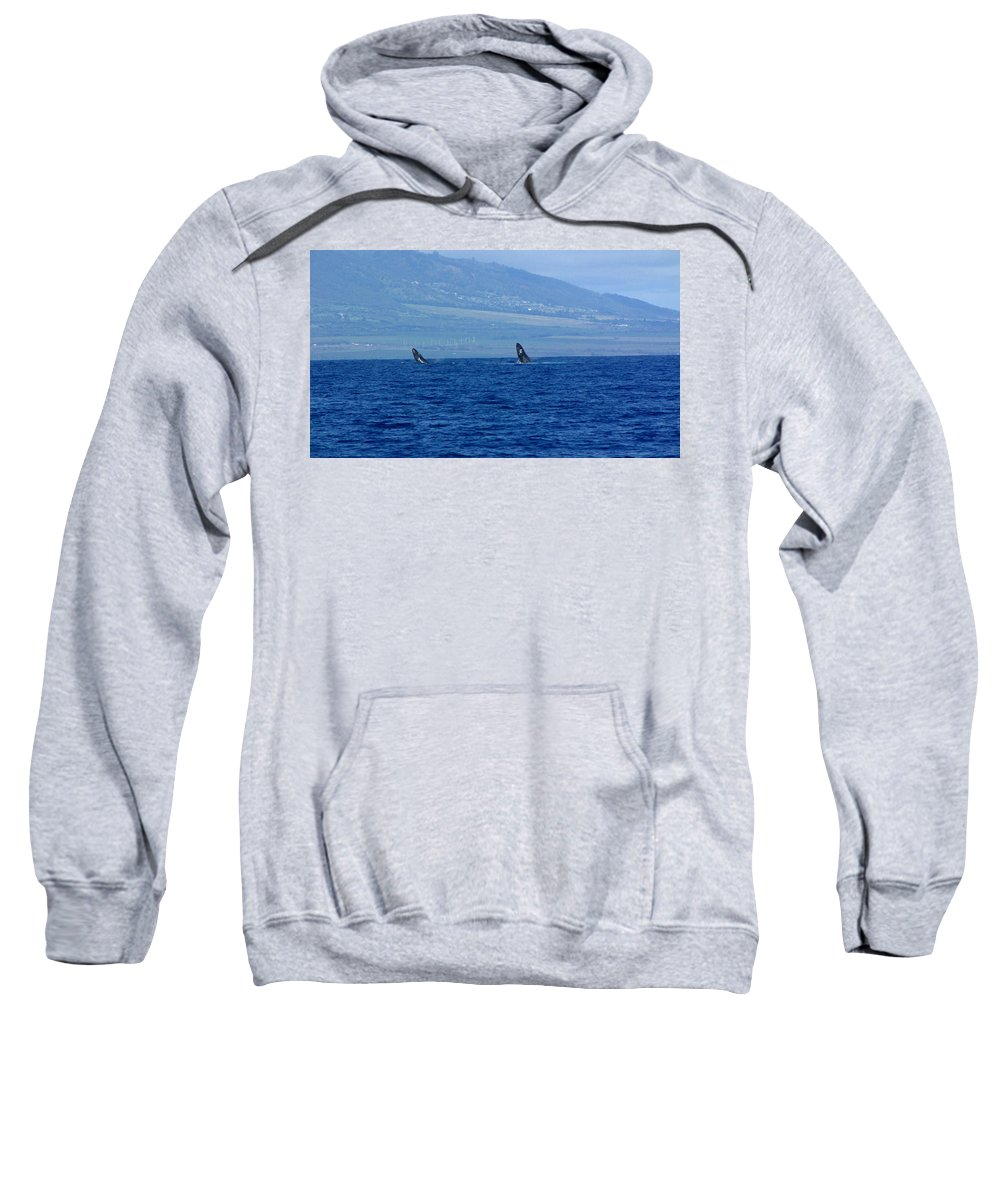 Whale Sweatshirt featuring the photograph Double Breach by Sarah Houser