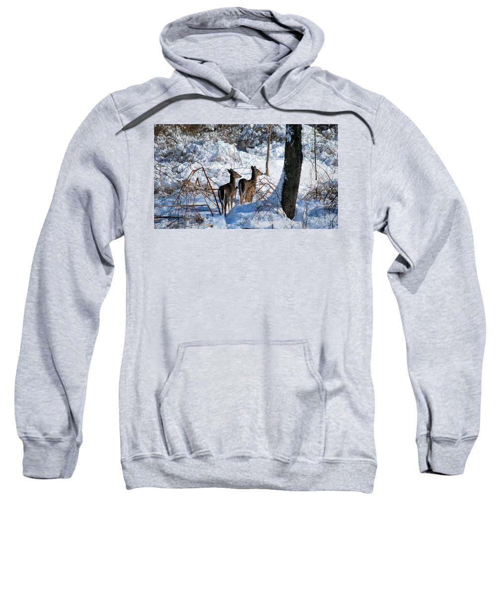 Deer Sweatshirt featuring the photograph Double Look by Lori Tambakis
