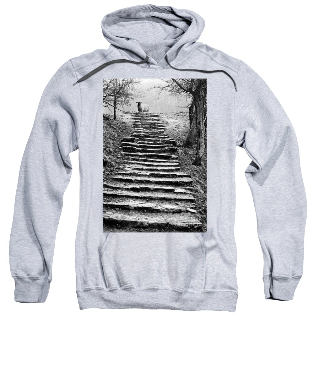 Animal Sweatshirt featuring the photograph Dovedale steps by John Edwards