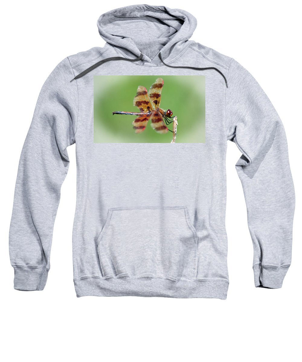 Dragon Sweatshirt featuring the photograph Dragon Fly by Ben Zell