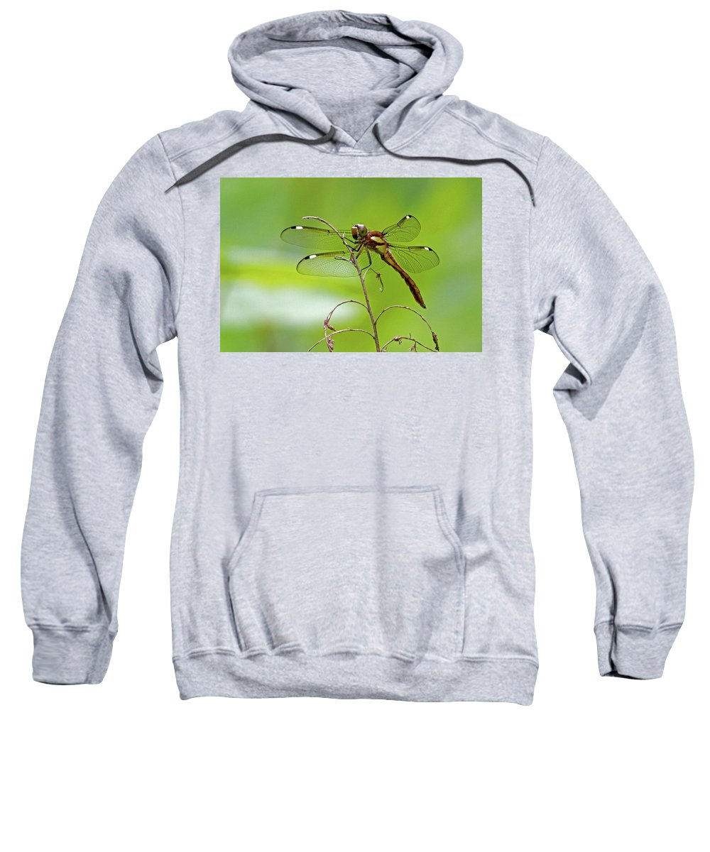 Dragonfly Sweatshirt featuring the photograph Dragonfly by David Freuthal