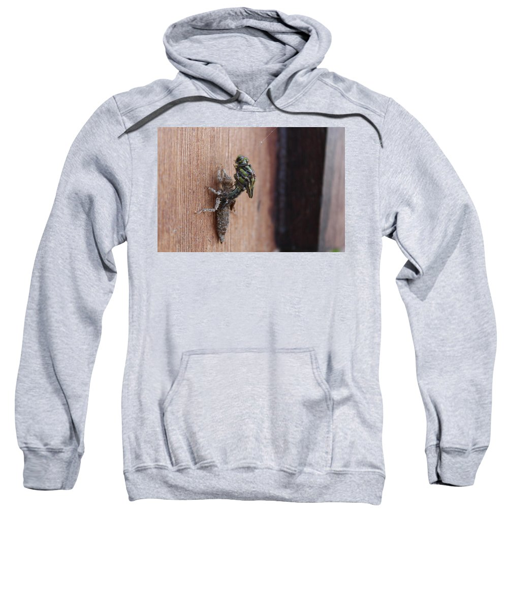 North Sweatshirt featuring the photograph Dragonfly Ecdysis by Nicholas Miller