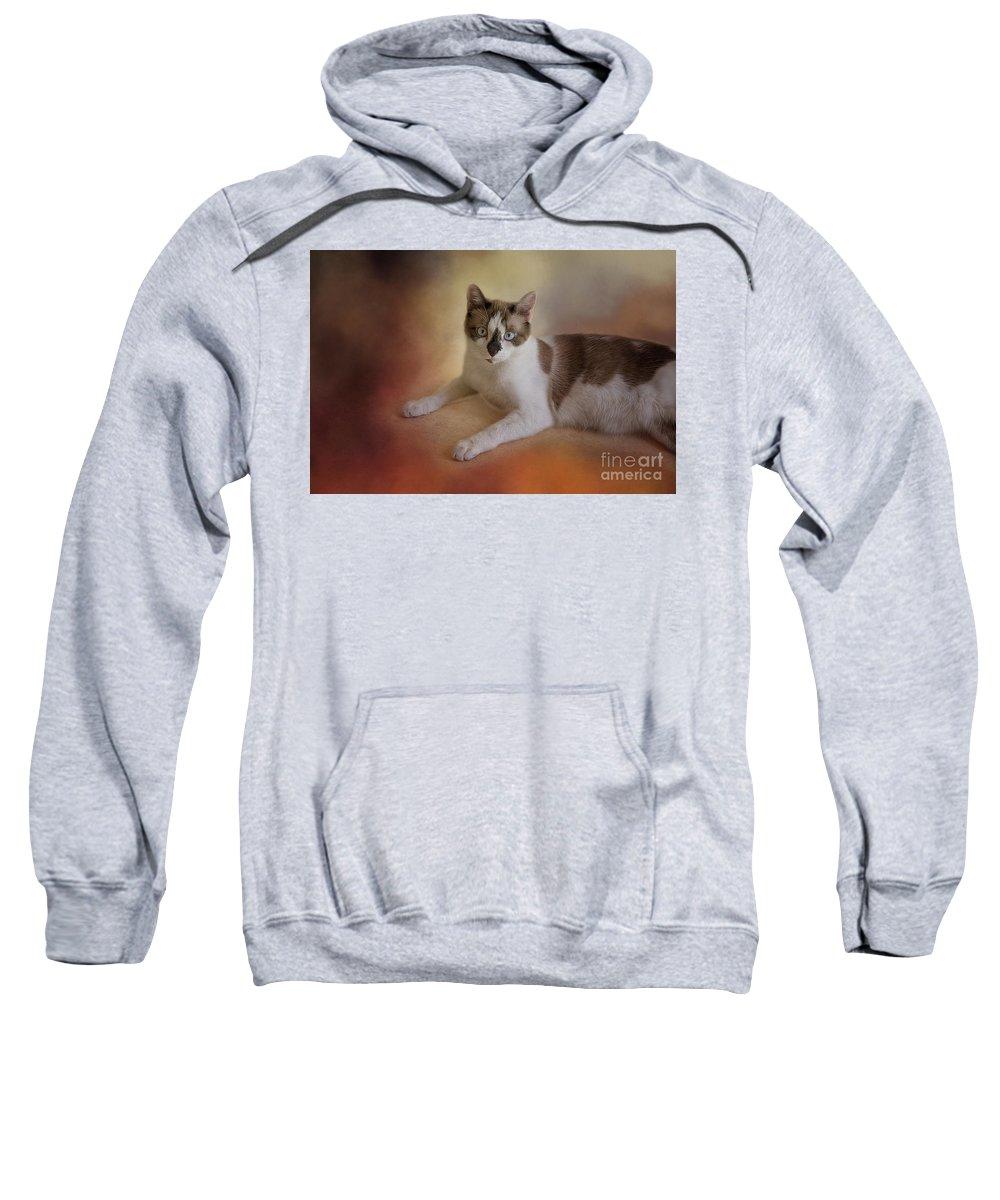 Snowshoe Cat Sweatshirt featuring the photograph Dreamy Snowshoe Cat by Elisabeth Lucas