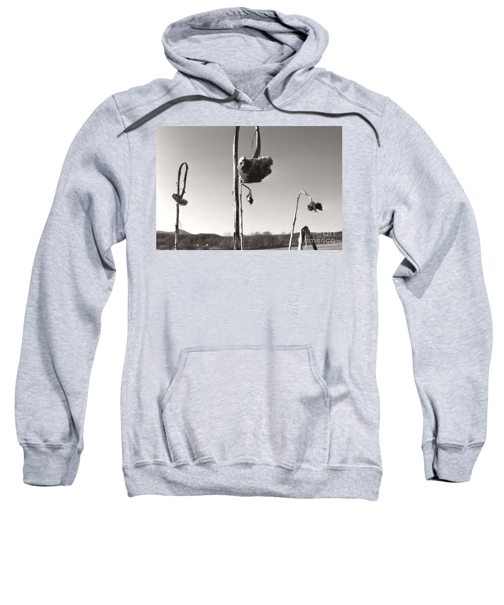 Sweatshirt featuring the photograph Dried Sunflower Closeup by Heather Kirk