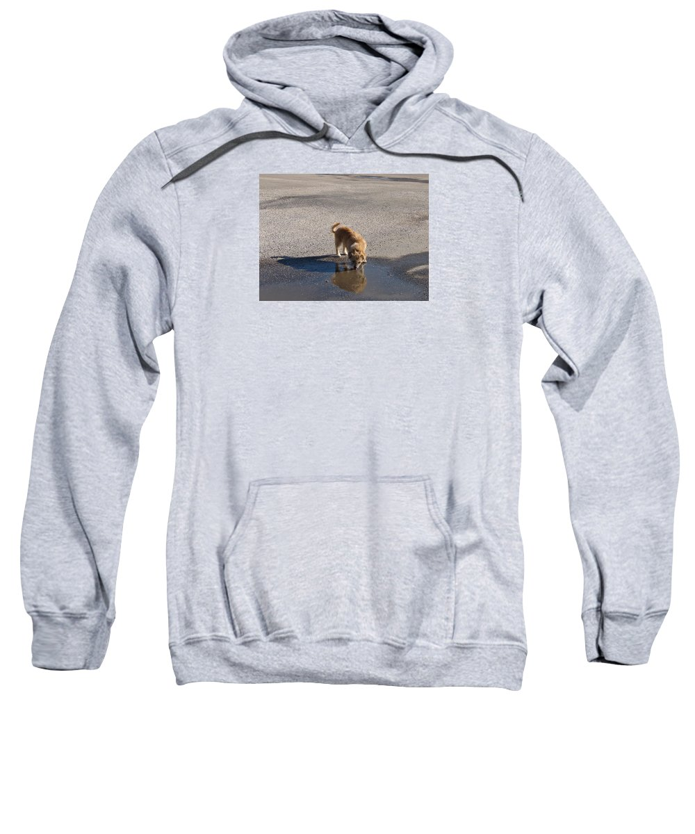 Dog Sweatshirt featuring the photograph Drinking Enough For Reflection And Shadow by J R  Seymour
