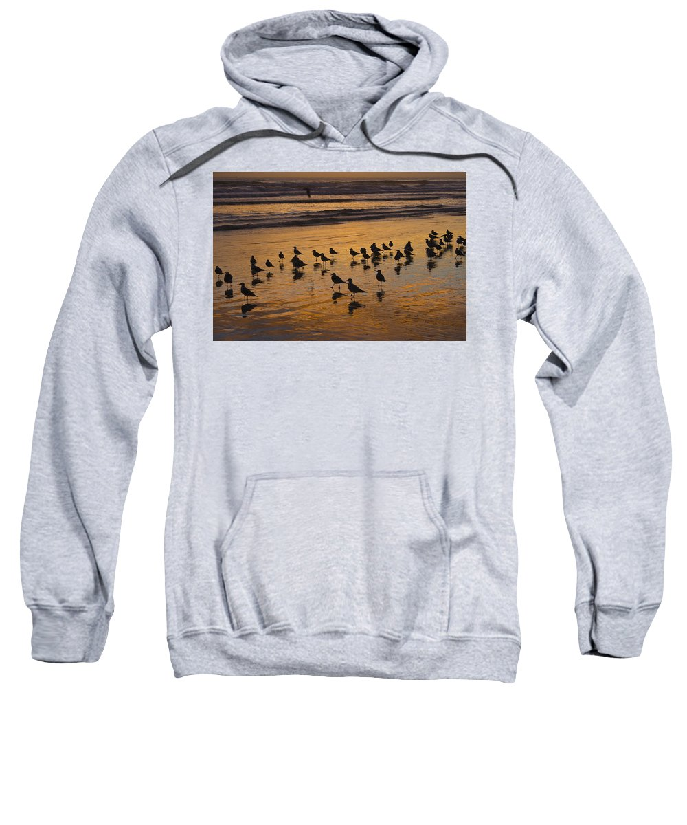 Beach Ocean Seagull Gull Bird Birds Sand Wave Waves Sun Sunrise Reflection Shaddow Sky Cloud Sweatshirt featuring the photograph Eager Anticipation by Andrei Shliakhau
