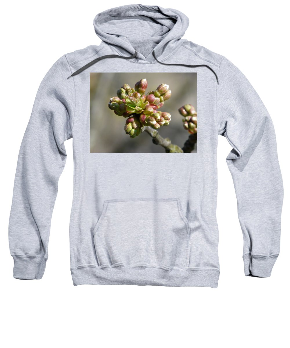 Cherry Sweatshirt featuring the photograph Early Cherry Blossom by Valerie Ornstein