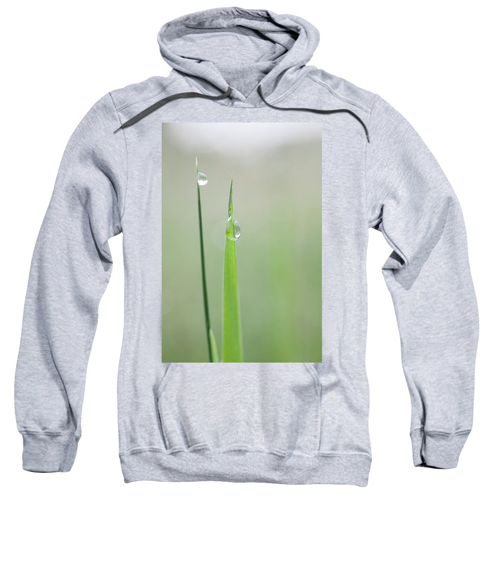 Drop Sweatshirt featuring the photograph Early Morning In The Meadow by Pierre Larcher