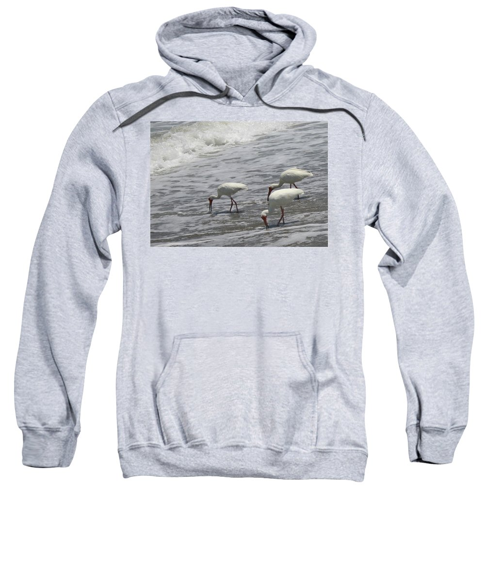 Ibis Sweatshirt featuring the photograph Eating by Susan Clay