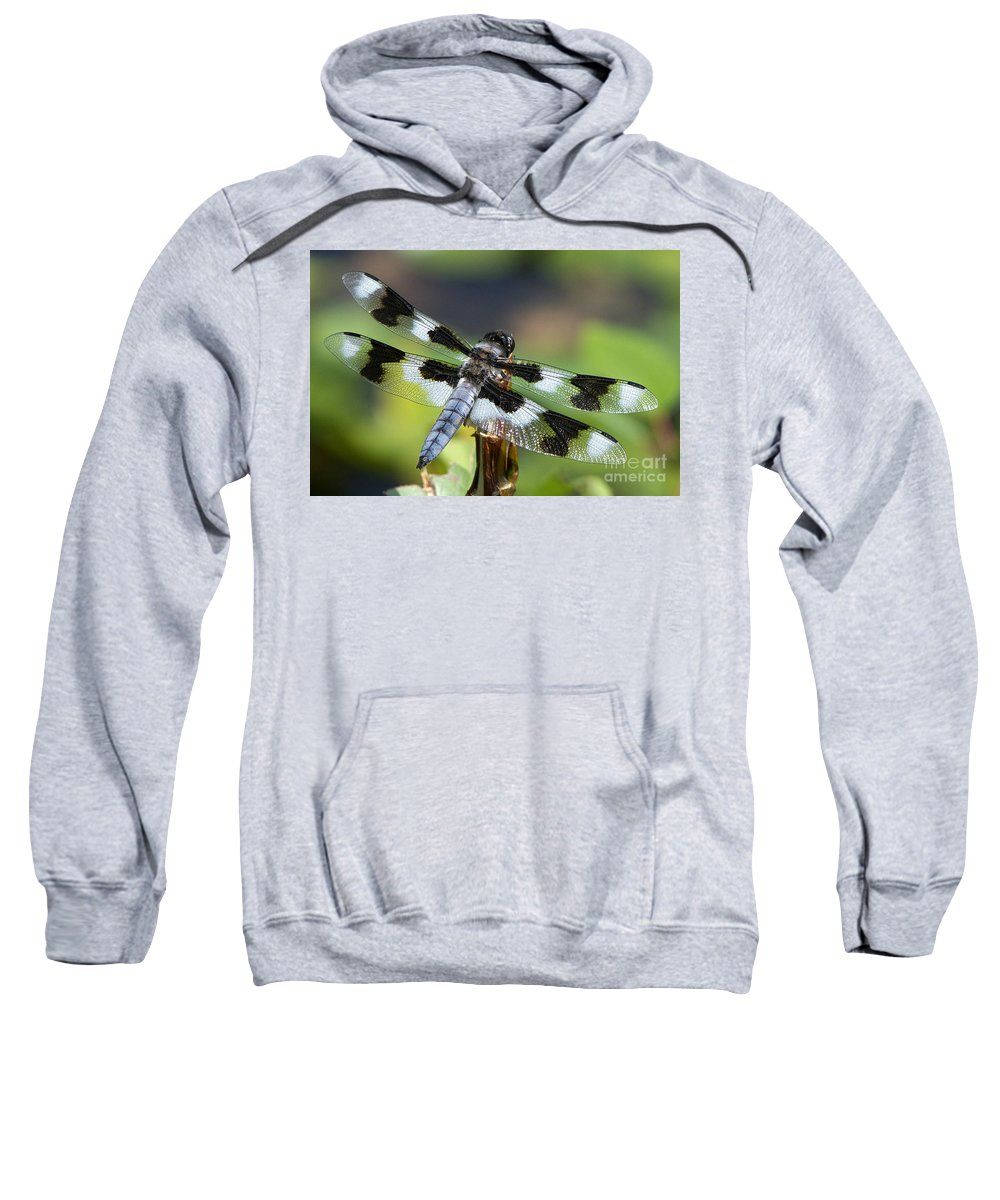 Eight-spotted Skimmer Sweatshirt featuring the photograph Eight-spotted Skimmer by Sharon Talson