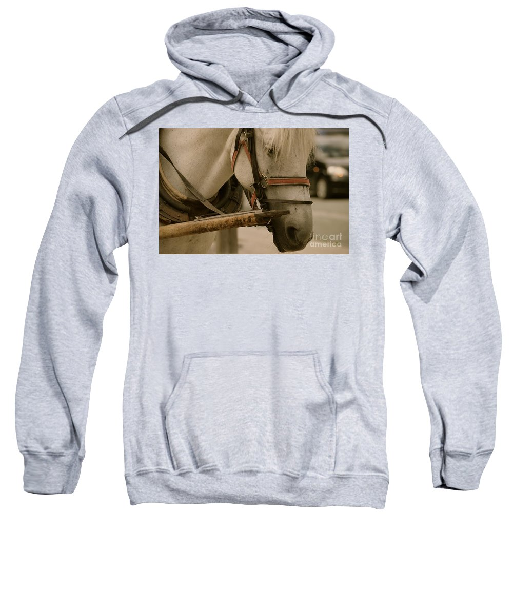 Horse Sweatshirt featuring the photograph El Cavallo by Photos By Zulma