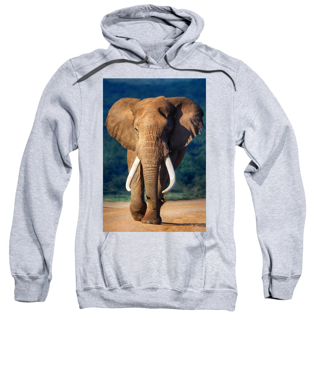 Elephant Sweatshirt featuring the photograph Elephant Approaching by Johan Swanepoel