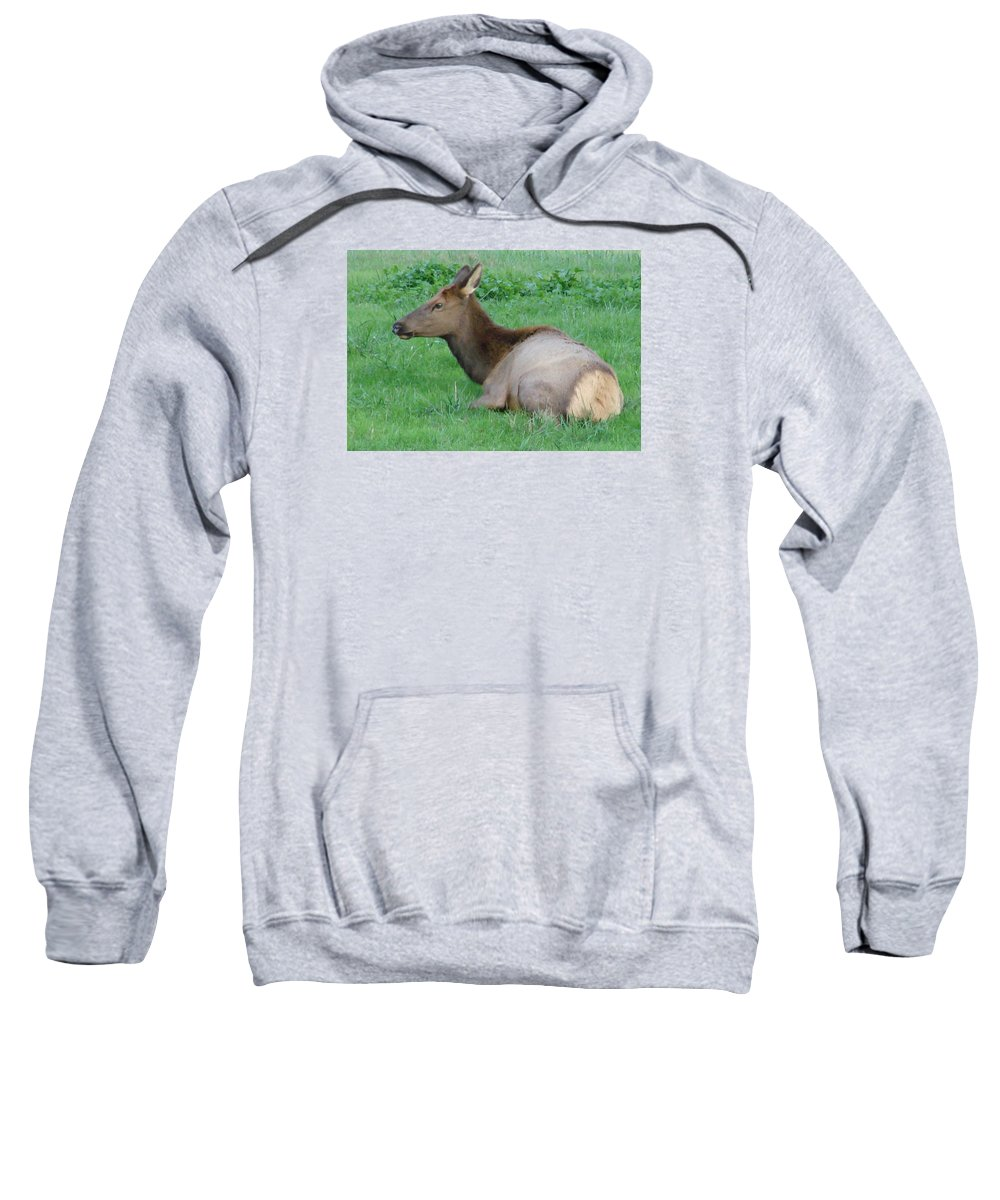Elk Sweatshirt featuring the photograph Elk Cow by Mary Halpin