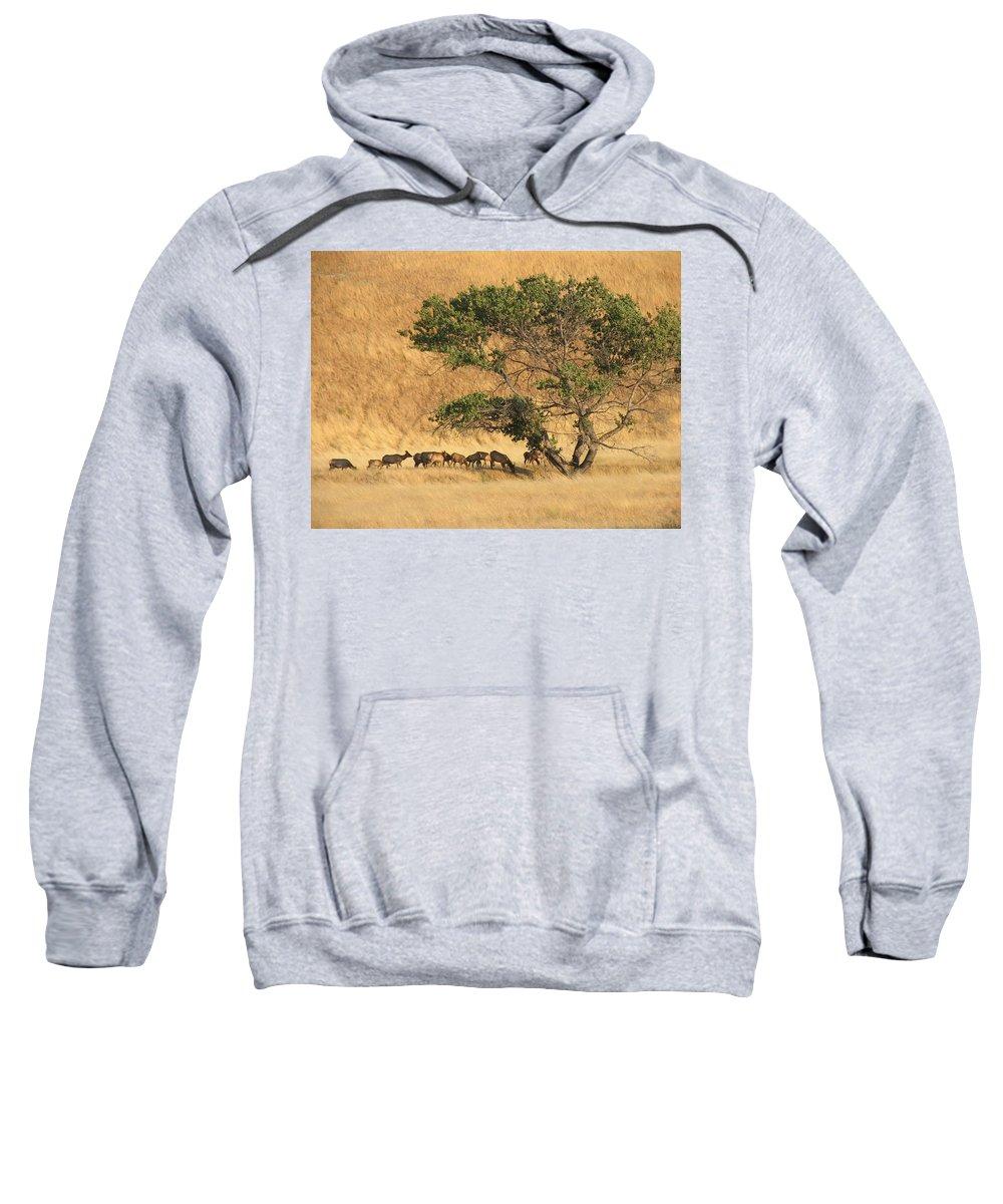 Landscapes Sweatshirt featuring the photograph Elk Under Tree by Karen W Meyer